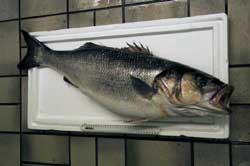 Large bass