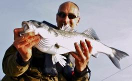 Matt with a fine South Coast Bass