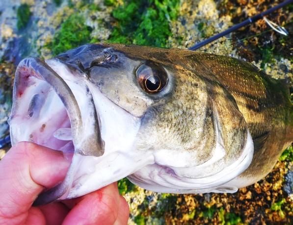 Bass close-up