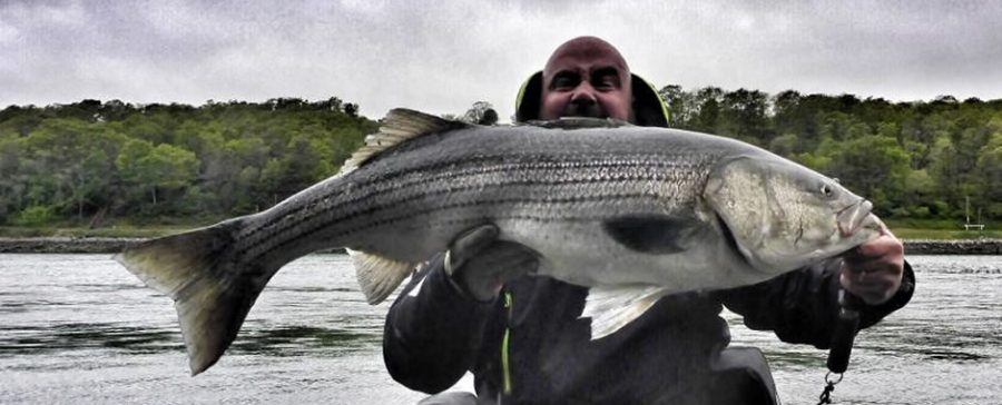 So What Exactly Is A Striped Bass?